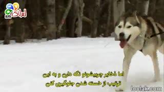سگ هاسکی و هرچی که لازمه بدونید