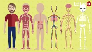 17 واقعیت جالب در مورد بدن انسان که نمی دونستین