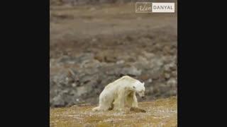 زمانی برای گرسنگی خرسها