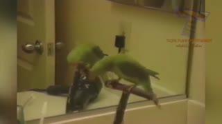 عکس العمل حیوانات به آینه