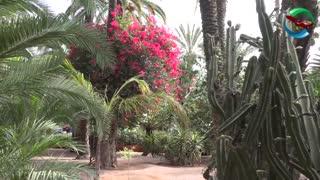 باغ های ماژورل مراکش | badsagroup