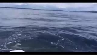 حمله نهنگ قاتل به قایق گردشگران ! 18+