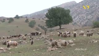 مستند فرهنگ و طبیعت ایران- کهبنگ-6