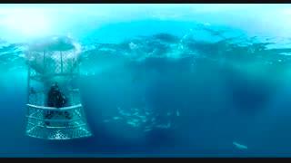 شنا با کوسه ها 360 درجه