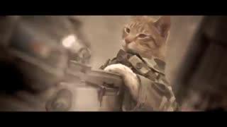 فداکاری یک گربه در میدان جنگ