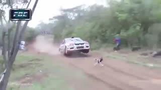سگ خوش شانس در پیست رالی