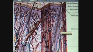 بخش ۱ .درمان اسکار اکنه با روش  #ماکرودرم   ابراژن .دکتر #مقیمی.