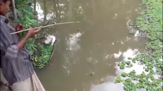 فیلم ماهیگیری کودکان و با بهترین طعمه ماهیگیری کپور