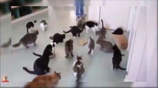 گربه های خنده دار