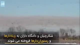 شهری که در ایران و جهان مشهور به قتلگاه پرندگان مهاجر است