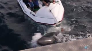 حمله کوسه سفید به قایق مستند سازان