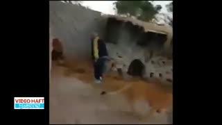 آزار شیرهای باغوحش شیراز توسط مدیر سابق سیرک