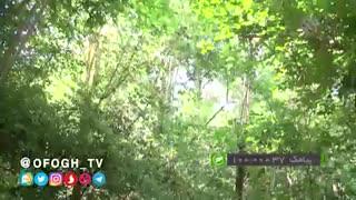 علم مدیریت جنگل در ایران چگونه است؟
