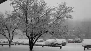 برف در روز اول بهار در واشینگتن دیسی