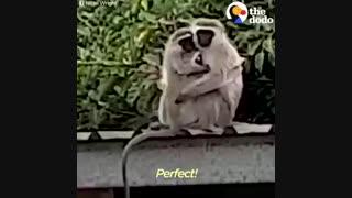 میمون های مهربان