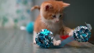 کادوس پرداز ایران -slow mo بازی بچه گربه ها