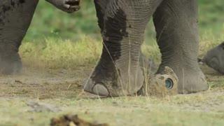 بازی کردن فیل ها با دوربین مستند سازان