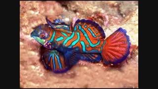 زیباترین ماهیان اکواریومی جهان