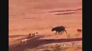 فرار از مرگ