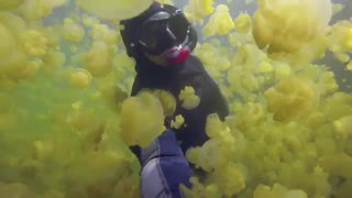 شنا با هزاران عروس دریایی