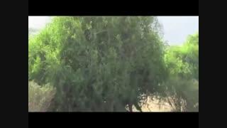 فیلم کوتاه مستند و زیبای حیات وحش افریقا/ شیر به دنبال میمون و میمون روی درخت و فراری