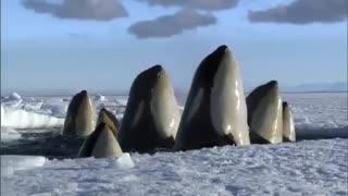 تصاویری باورنکردی از قطب شمال و جنوب در مستند زیبای FrozenPlanet