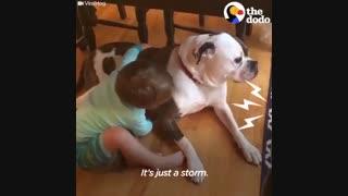 رفتار زیبای کودک با سگ ترسو