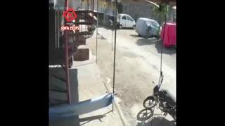 حمله عجیب میمون