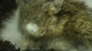 تایم لپس تجزیه شدن جسد موش