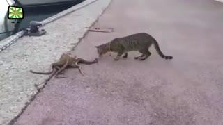 گربه های شجاع