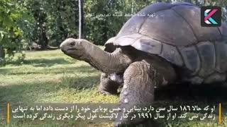 پیرترین حیوانات جهان