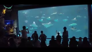 تور شانگهای چین در یک دقیقه