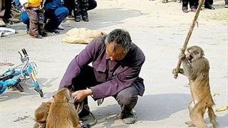 عاقبت عصبانیکردن حیوانات