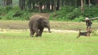 بازی بچه فیل و سگ