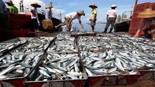 واقعیت ماجرای ماهیگیری چینیها در خلیج فارس چه بود؟