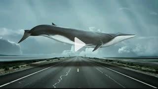 آهنگ نهنگ  آبی