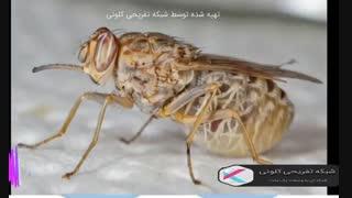۱۰ حشره خطرناک و کشنده در جهان