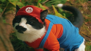 سوپر ماریوی گربه ای در دنیای واقعی
