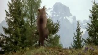 سینمایی خرس زخمی و بچه خرس یتیم