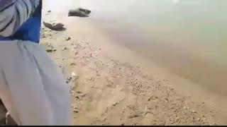 زیباترین فیلم مستند صید ماهی کپور با قلاب