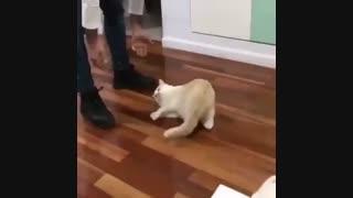 گربه ها لیز خوردن دوس دارن