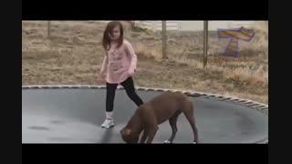 کار با ترامپلین توسط سگ