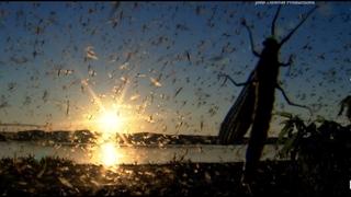 هجوم آوردن سالانه گونه ای از پشه های تالابی به شهری در آمریکا