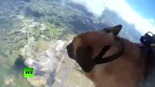 سگ ارتشی علاقمند به چتربازی