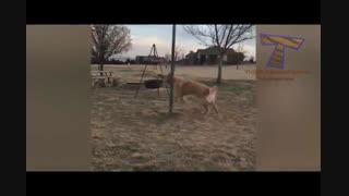 سرکار گذاشتن سگ