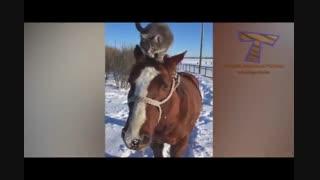نجابت اسب