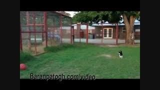 بگی گربه ای که حتی به شیر هم رو نمیده - خنده دار از حیوانات