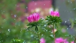 بهار : شاعر استاد رضا افضلی با آوای زری مینویی