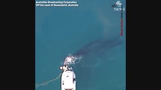 نجات بچه نهنگ از تور صیادان