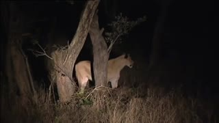 زیباترین فیلم مستند  کامل حیات وحش افریقا  شامل شیرها و گور خرها و عقابها و میمونها و نوع زندگی و جنگ حیوانات حیات وحش افریقا